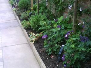 purple_planting